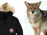 Canada Goose Jacket Coyote Fur