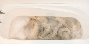 Washing sheepskin in the bath